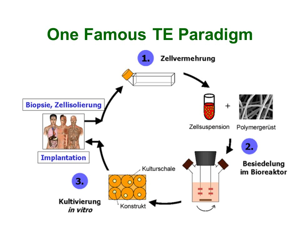 One Famous TE Paradigm