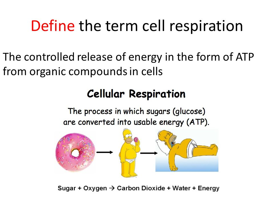 Define the term cell respiration