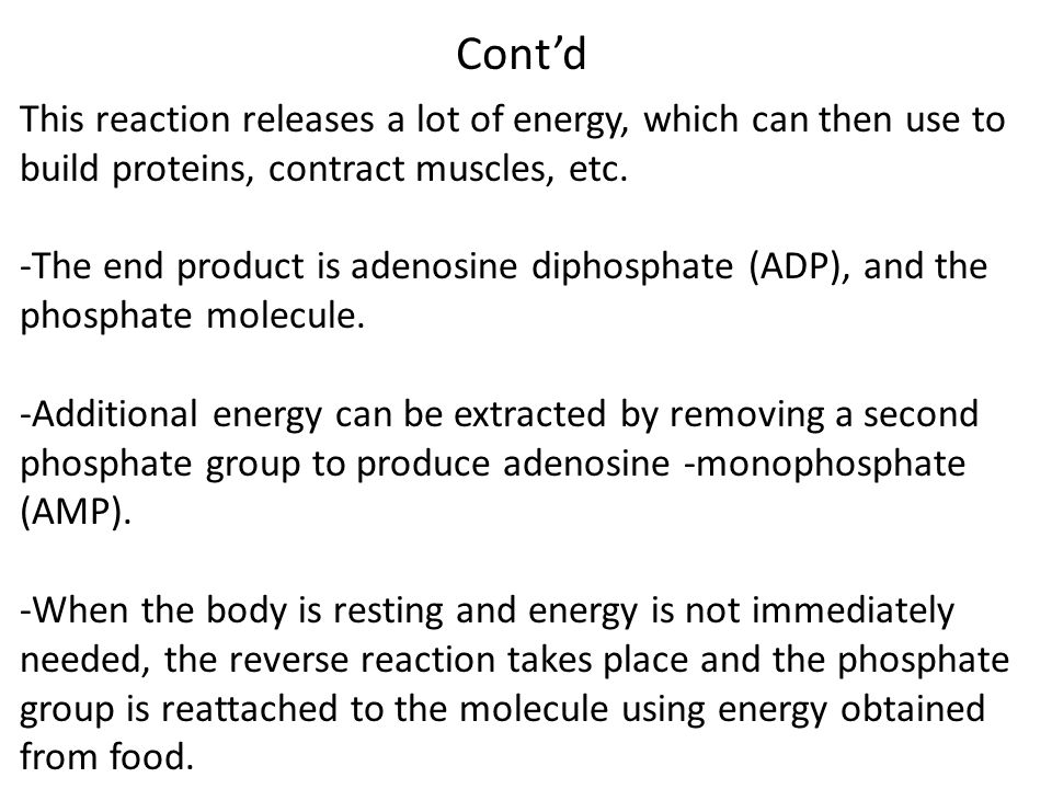 Cont'd This reaction releases a lot of energy, which can then use to build proteins, contract muscles, etc.