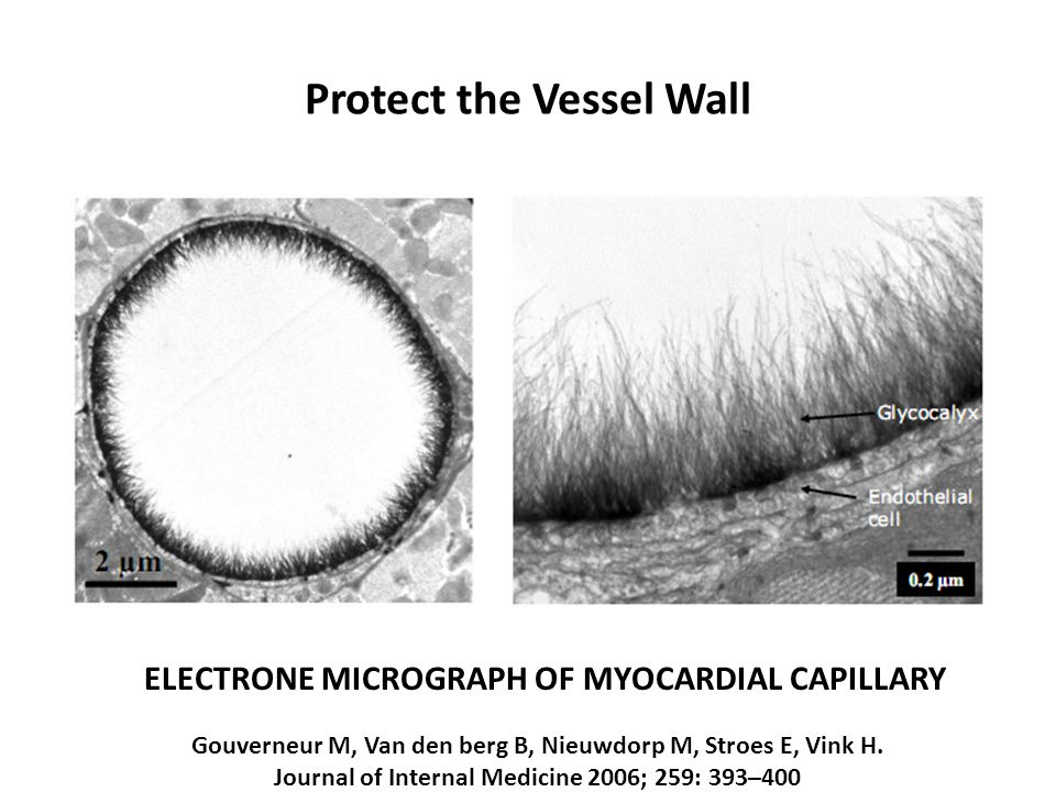 Protect the Vessel Wall