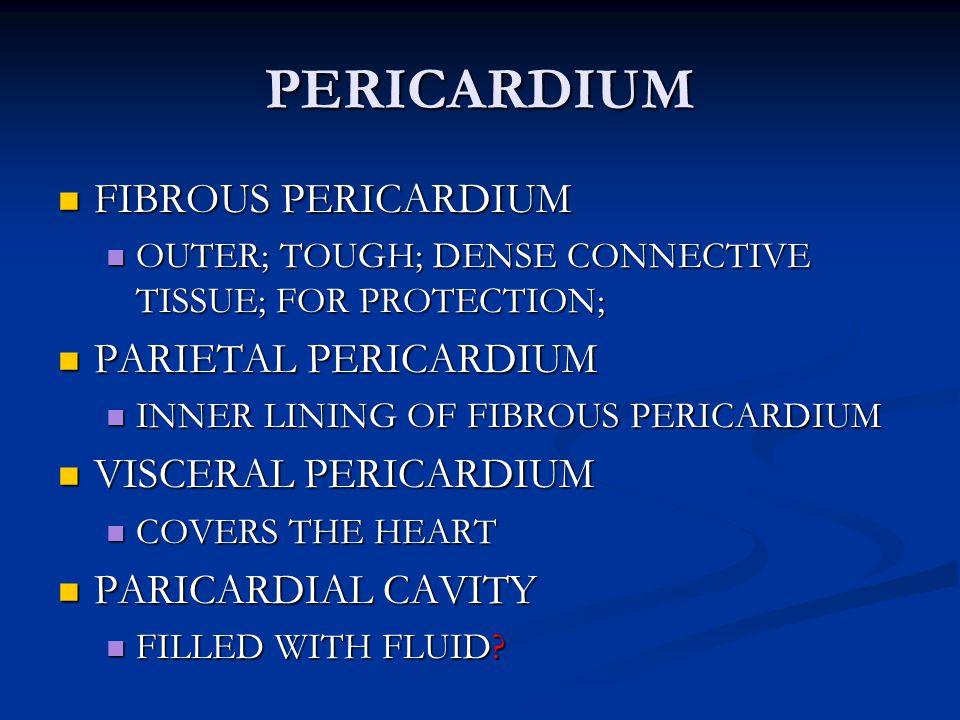 PERICARDIUM FIBROUS PERICARDIUM PARIETAL PERICARDIUM