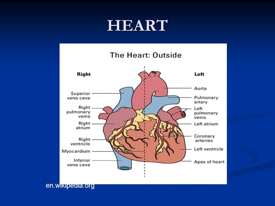HEART en.wikipedia.org