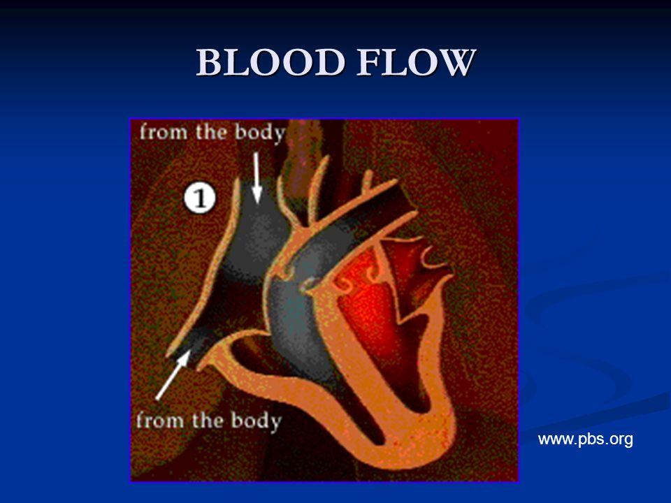BLOOD FLOW www.pbs.org