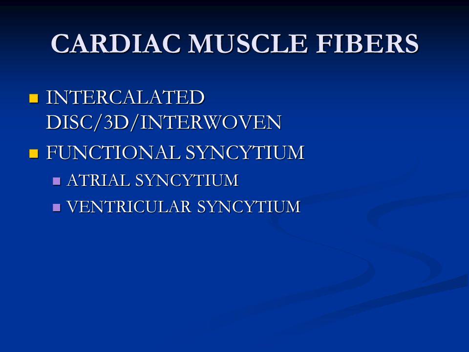 CARDIAC MUSCLE FIBERS INTERCALATED DISC/3D/INTERWOVEN