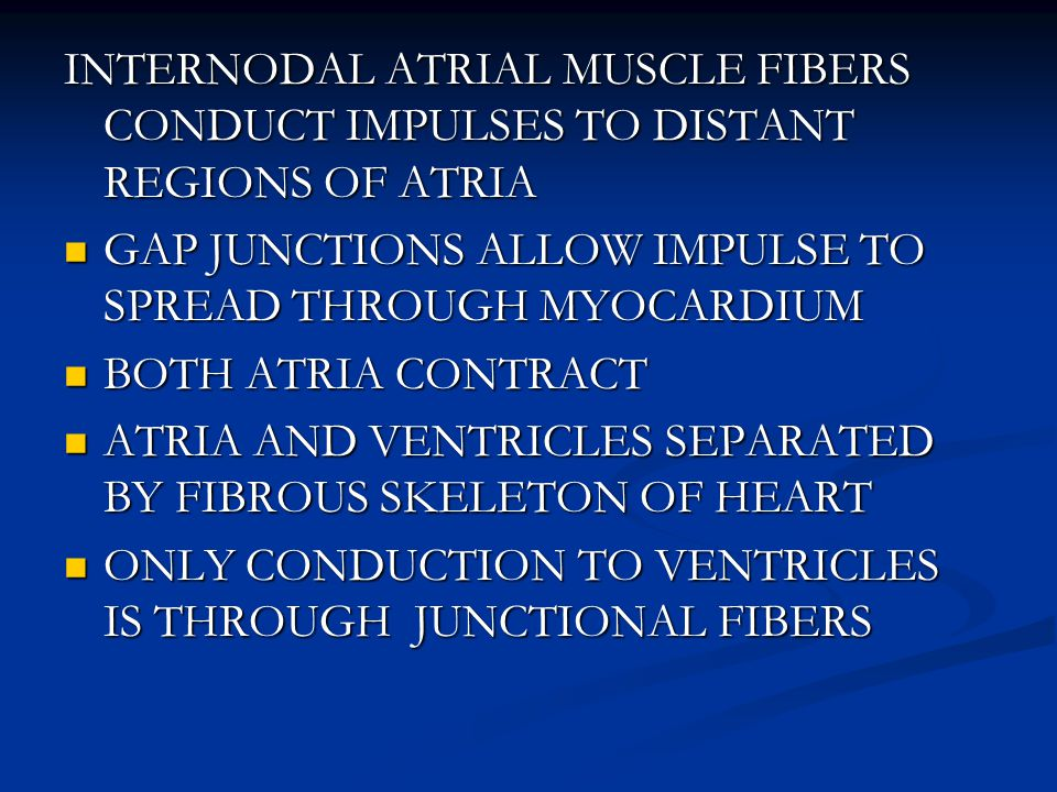 INTERNODAL ATRIAL MUSCLE FIBERS CONDUCT IMPULSES TO DISTANT REGIONS OF ATRIA