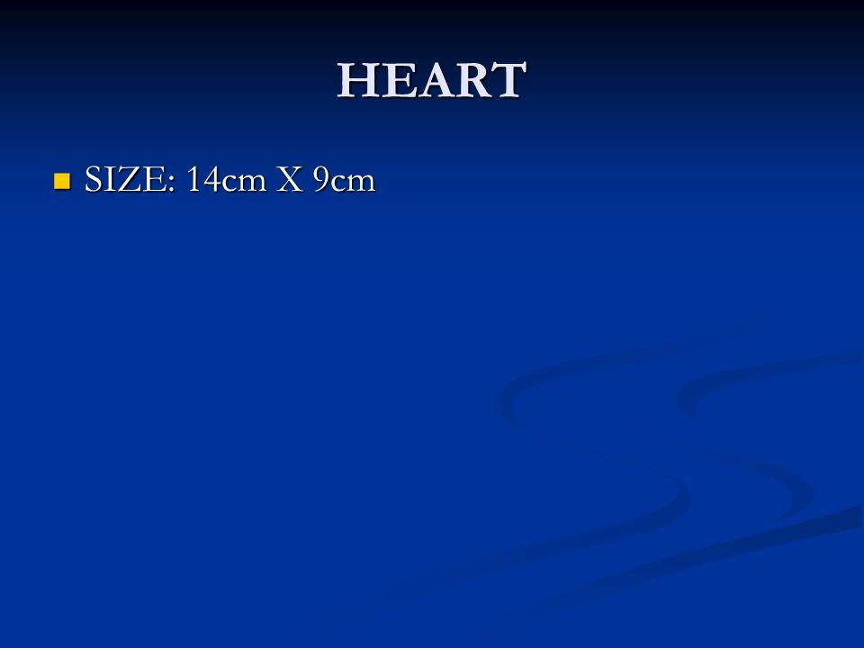 HEART SIZE: 14cm X 9cm