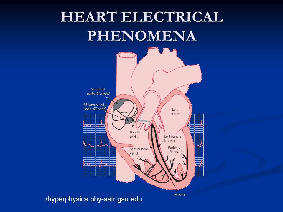 HEART ELECTRICAL PHENOMENA