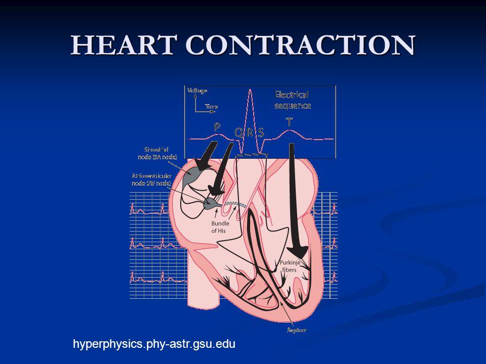 HEART CONTRACTION hyperphysics.phy-astr.gsu.edu