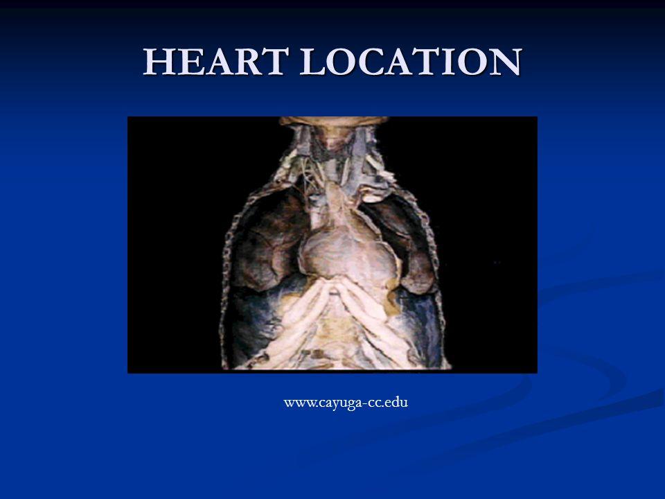 HEART LOCATION www.cayuga-cc.edu
