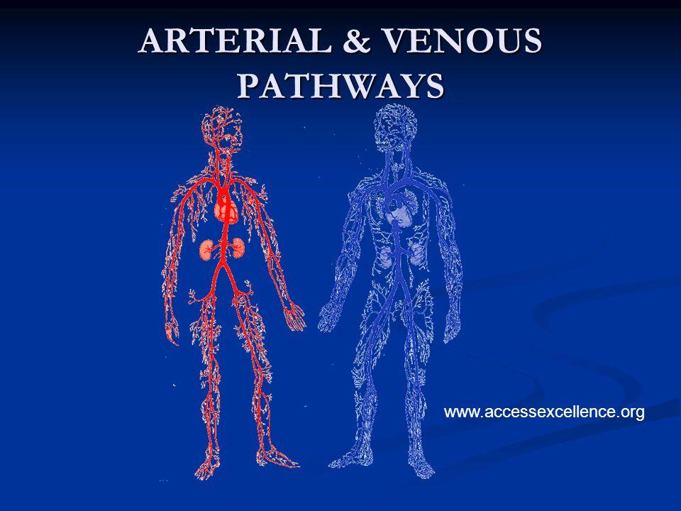 ARTERIAL & VENOUS PATHWAYS