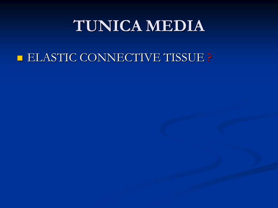 TUNICA MEDIA ELASTIC CONNECTIVE TISSUE