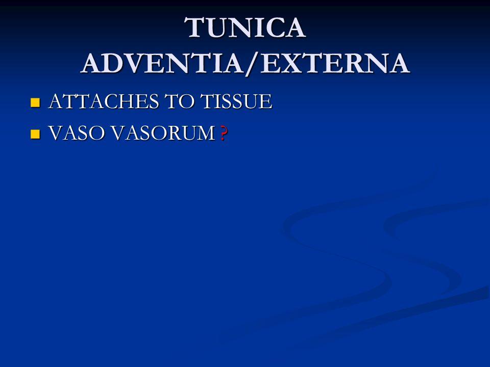 TUNICA ADVENTIA/EXTERNA