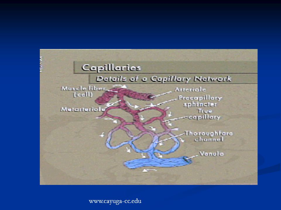 www.cayuga-cc.edu