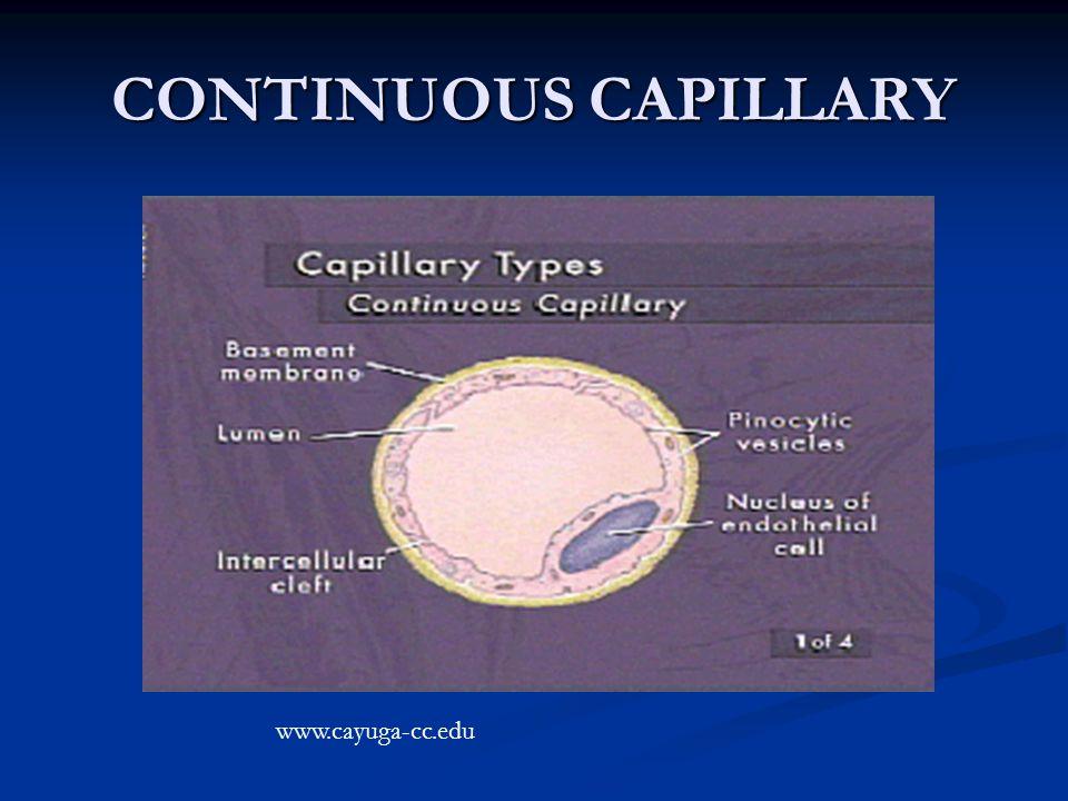 CONTINUOUS CAPILLARY www.cayuga-cc.edu