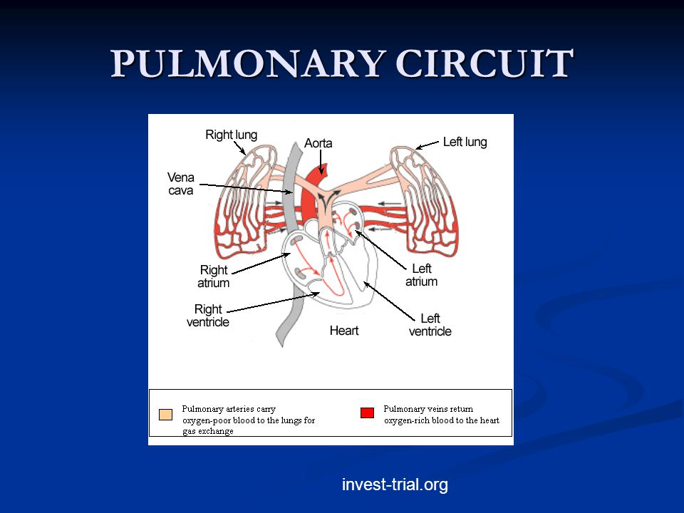 PULMONARY CIRCUIT invest-trial.org
