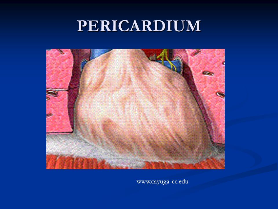 PERICARDIUM www.cayuga-cc.edu