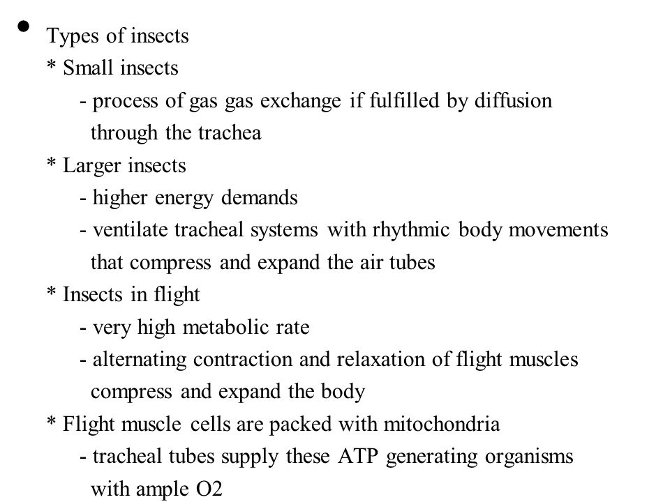Types of insects * Small insects. - process of gas gas exchange if fulfilled by diffusion. through the trachea.