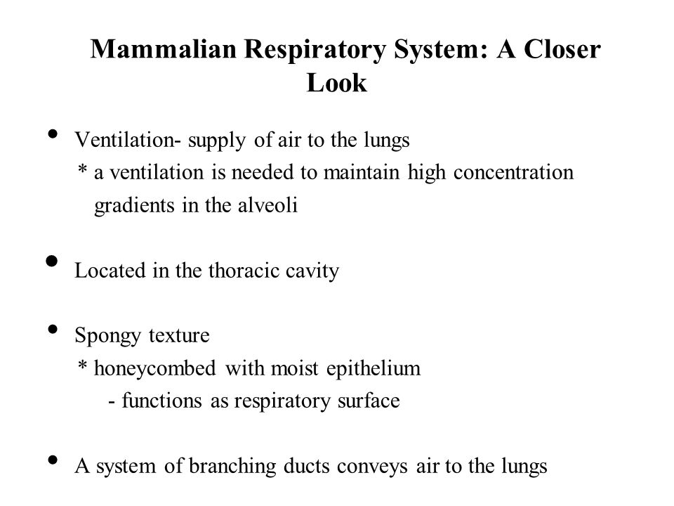 Mammalian Respiratory System: A Closer Look