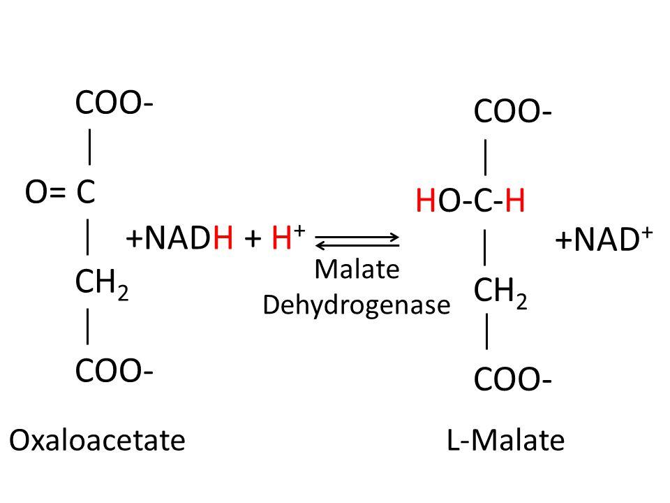 COO- COO- O= C HO-C-H CH2 CH2 +NADH + H+ +NAD+ Oxaloacetate L-Malate