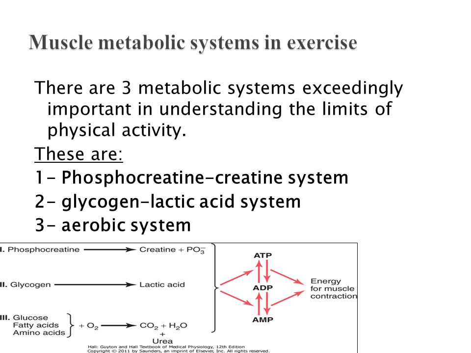 Muscle metabolic systems in exercise