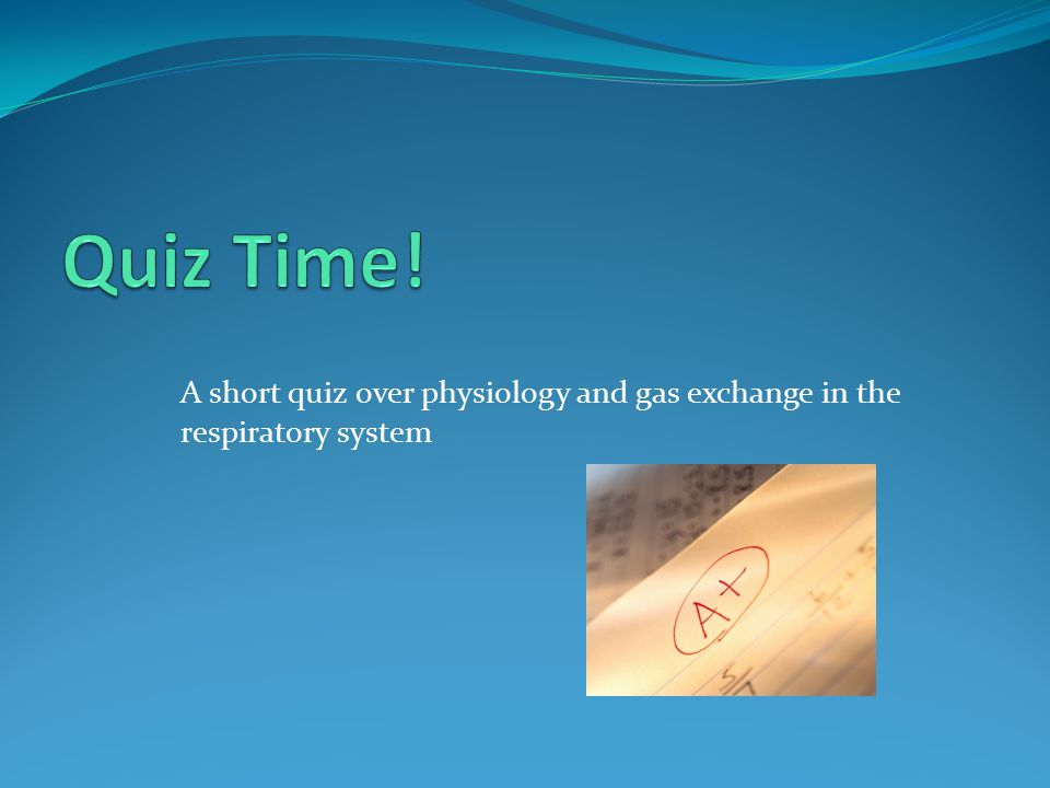 Quiz Time! A short quiz over physiology and gas exchange in the respiratory system