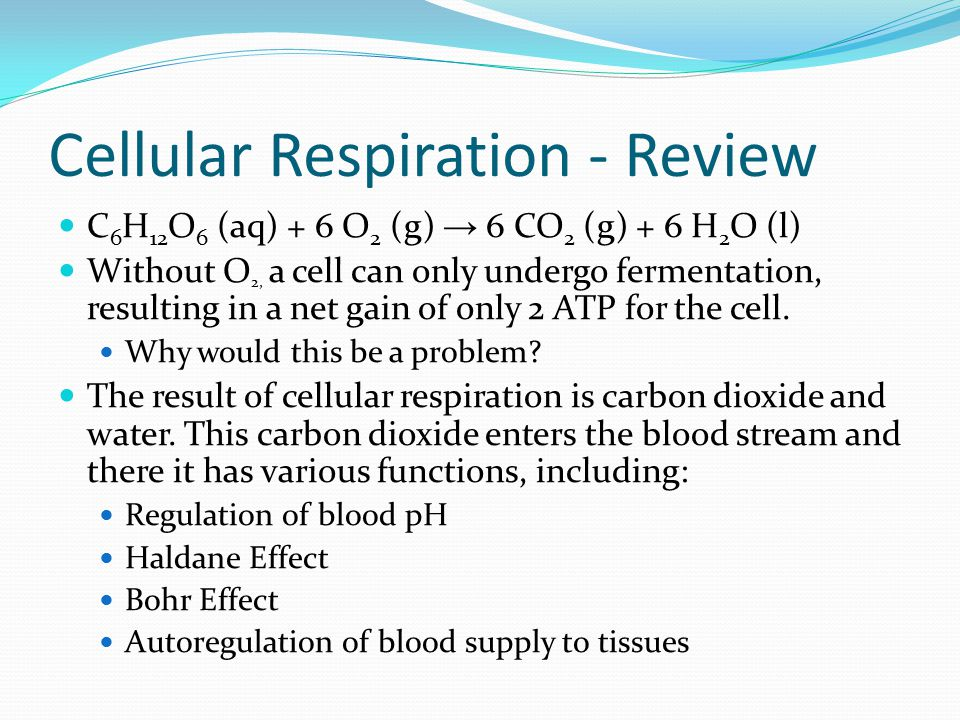 Cellular Respiration - Review