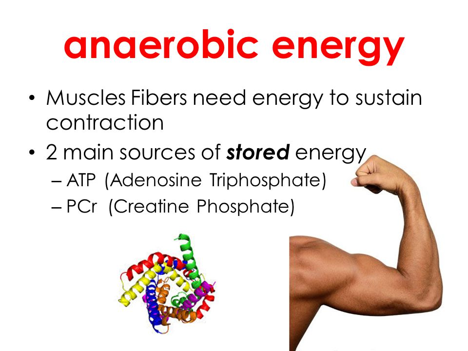 anaerobic energy Muscles Fibers need energy to sustain contraction