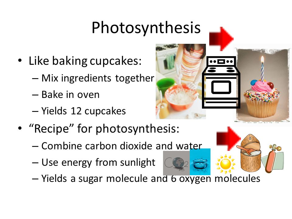 Photosynthesis Like baking cupcakes: Recipe for photosynthesis: