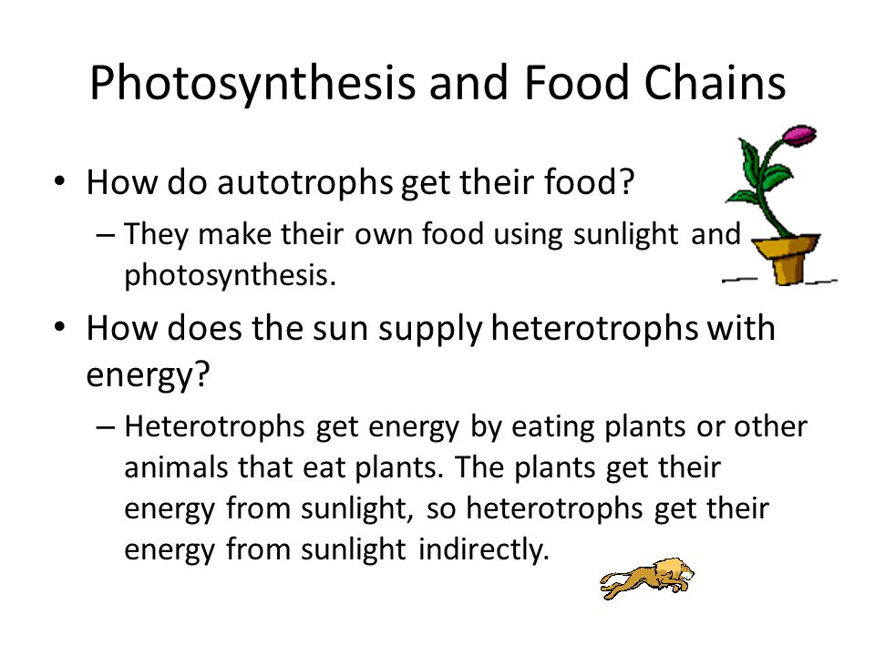 Photosynthesis and Food Chains