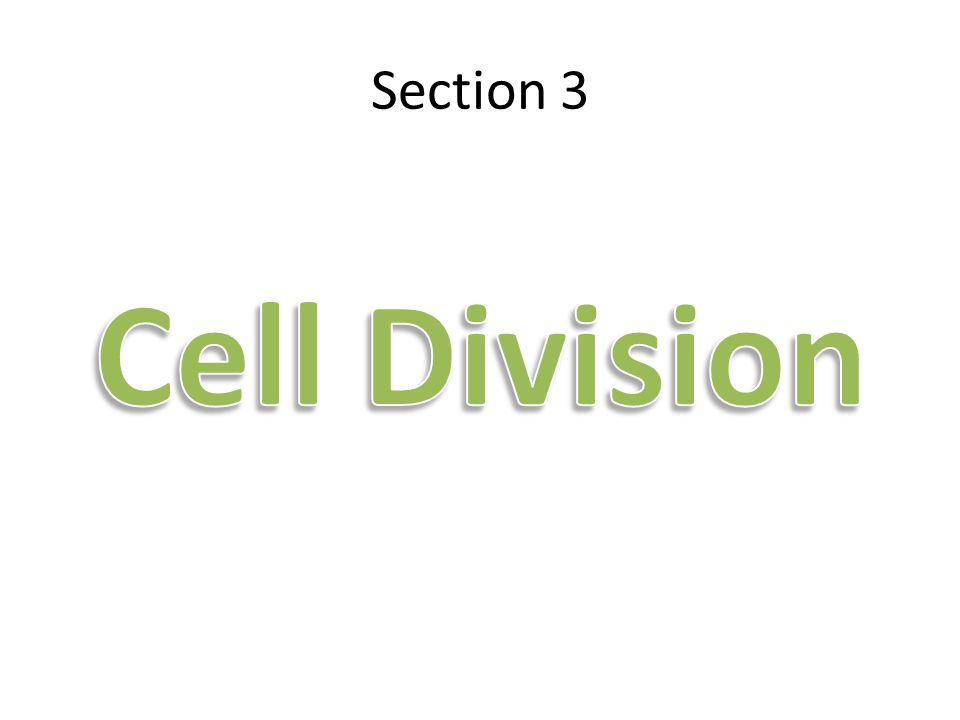 Section 3 Cell Division