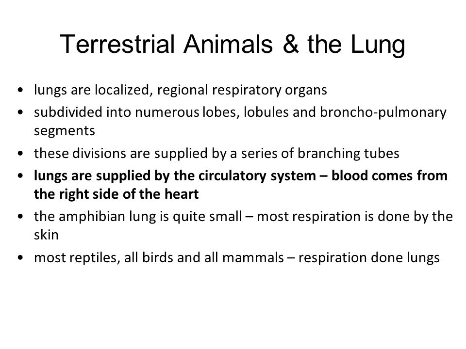 Terrestrial Animals & the Lung
