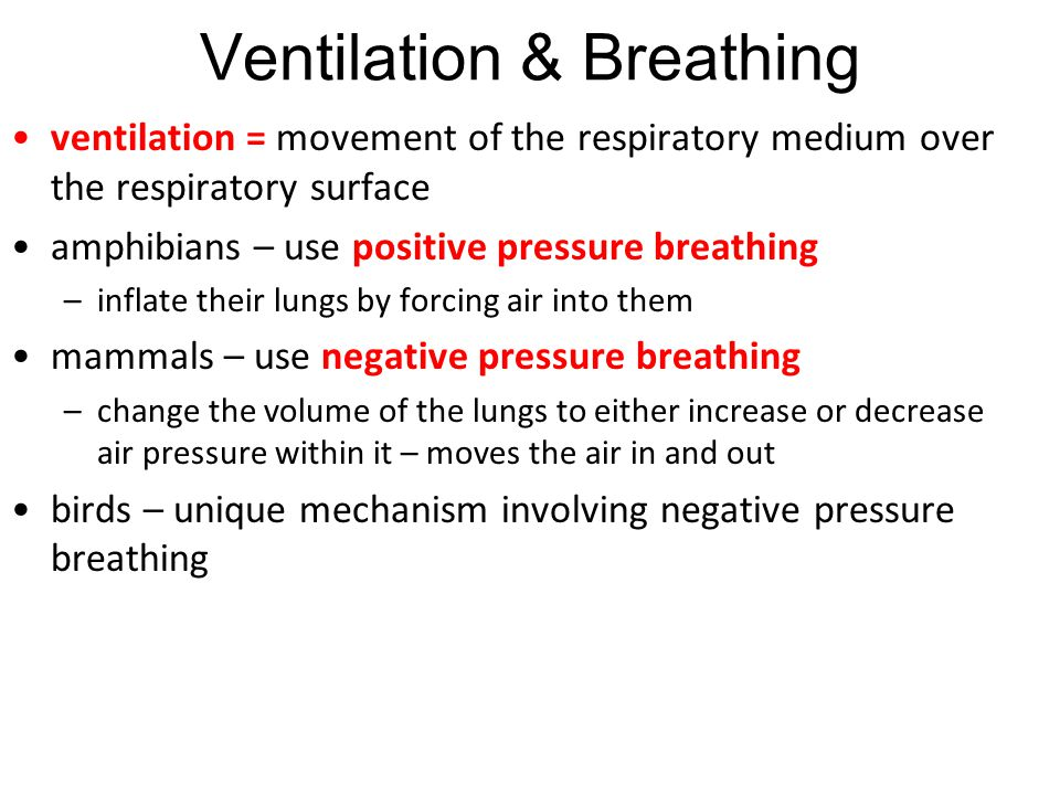 Ventilation & Breathing