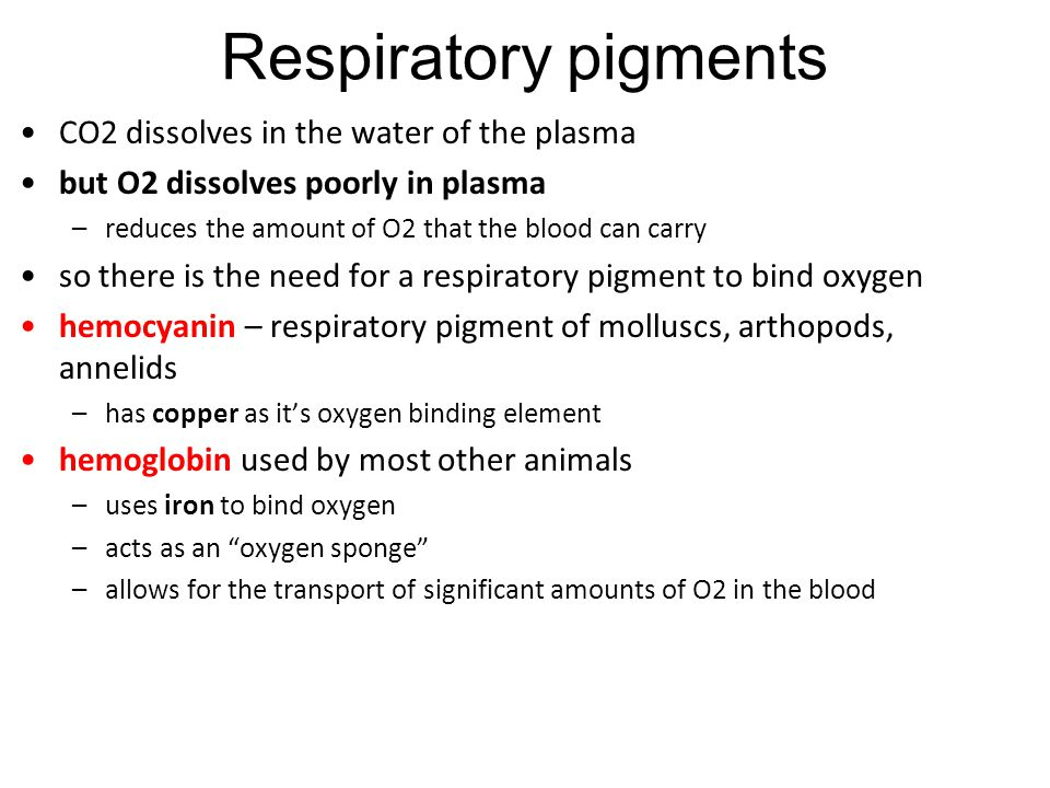 Respiratory pigments CO2 dissolves in the water of the plasma