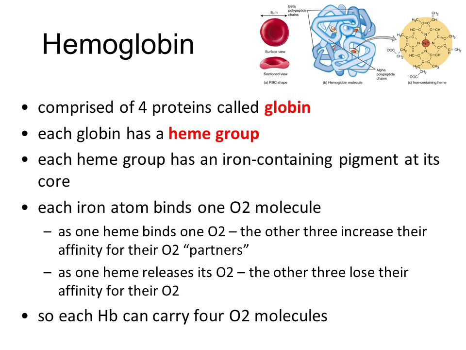 Hemoglobin comprised of 4 proteins called globin