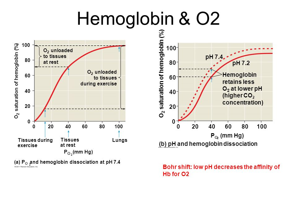 Hemoglobin & O2 (b) pH and hemoglobin dissociation PO (mm Hg) 20 40 60