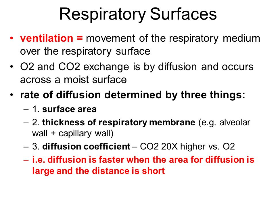 Respiratory Surfaces ventilation = movement of the respiratory medium over the respiratory surface.