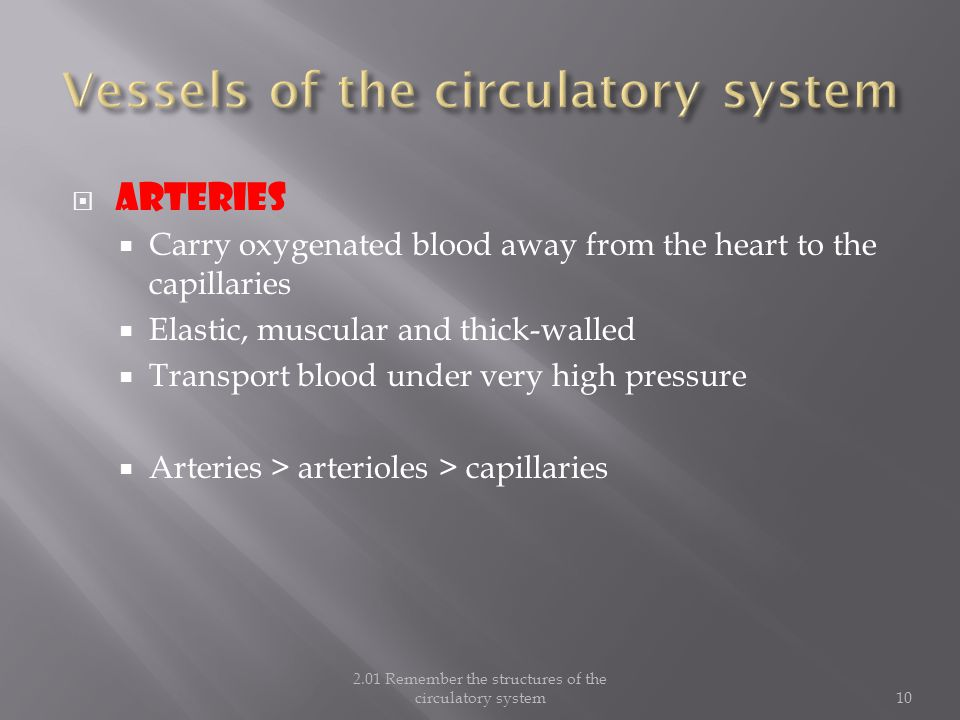 Vessels of the circulatory system