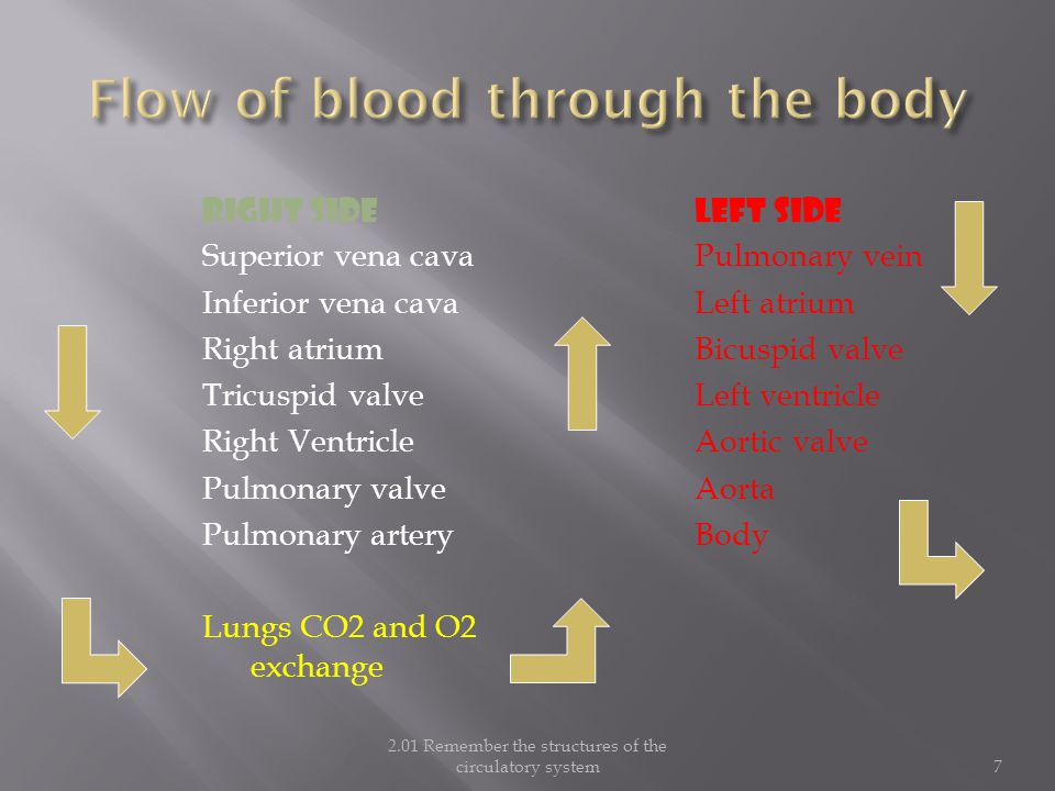 Flow of blood through the body