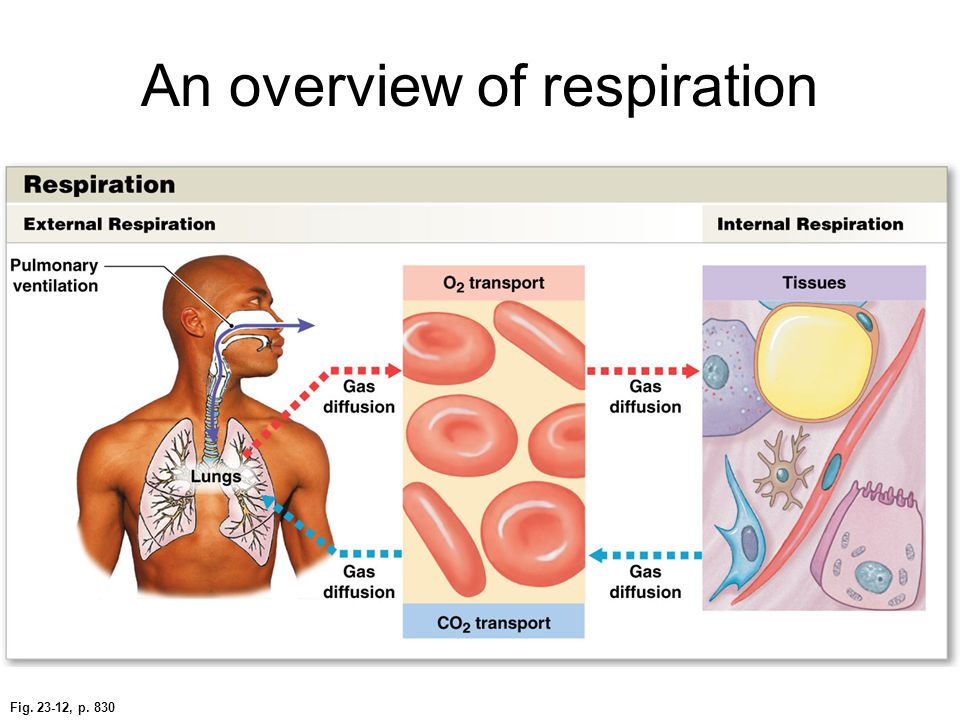 An overview of respiration