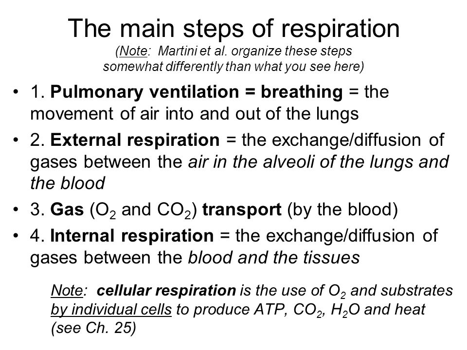 The main steps of respiration (Note: Martini et al