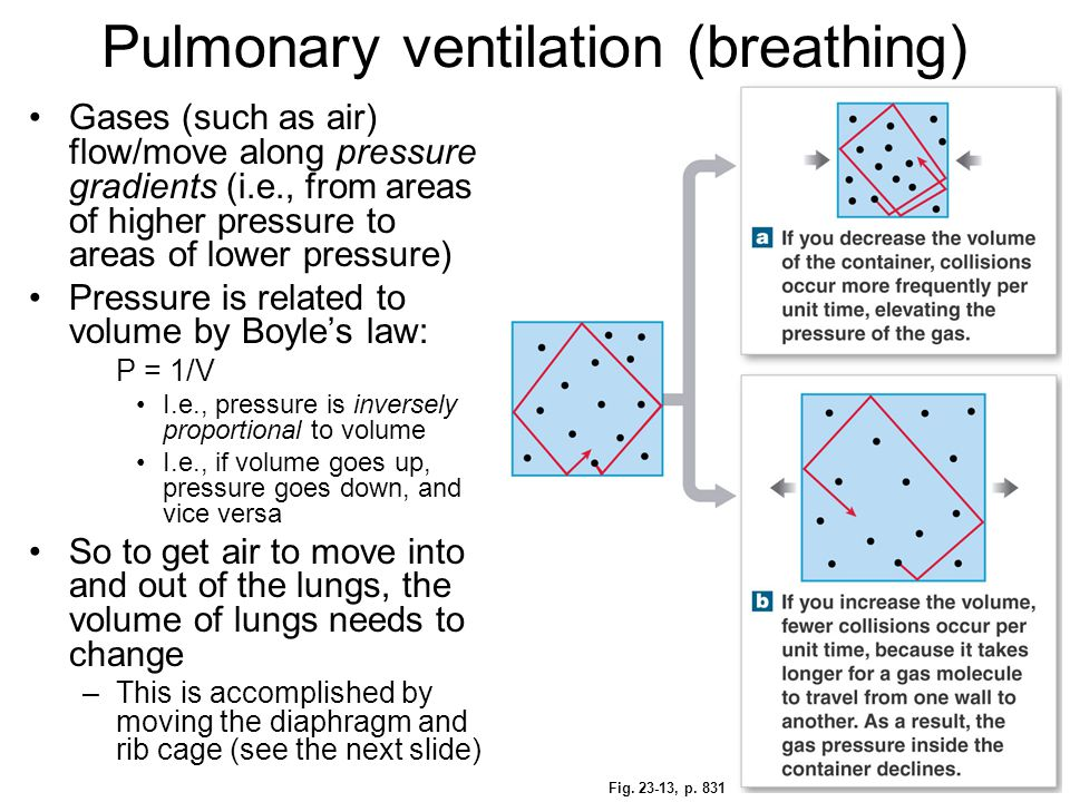 Pulmonary ventilation (breathing)