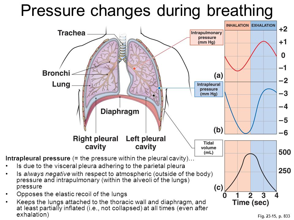 Pressure changes during breathing
