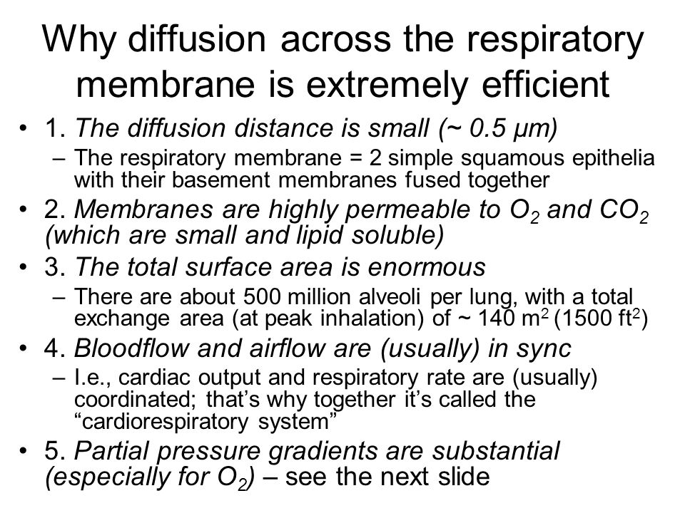 Why diffusion across the respiratory membrane is extremely efficient