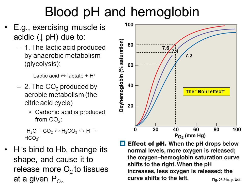 Blood pH and hemoglobin