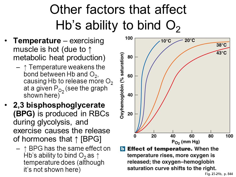 Other factors that affect Hb's ability to bind O2