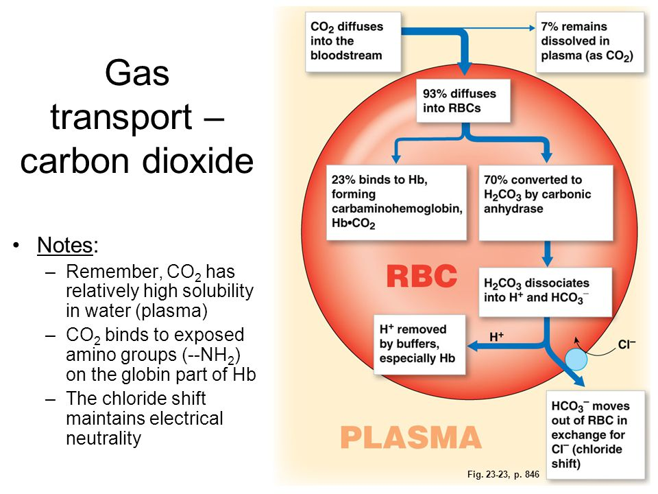 Gas transport – carbon dioxide