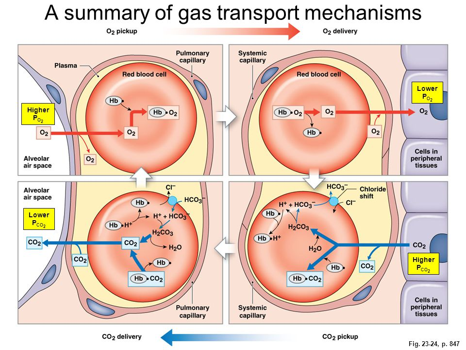 A summary of gas transport mechanisms
