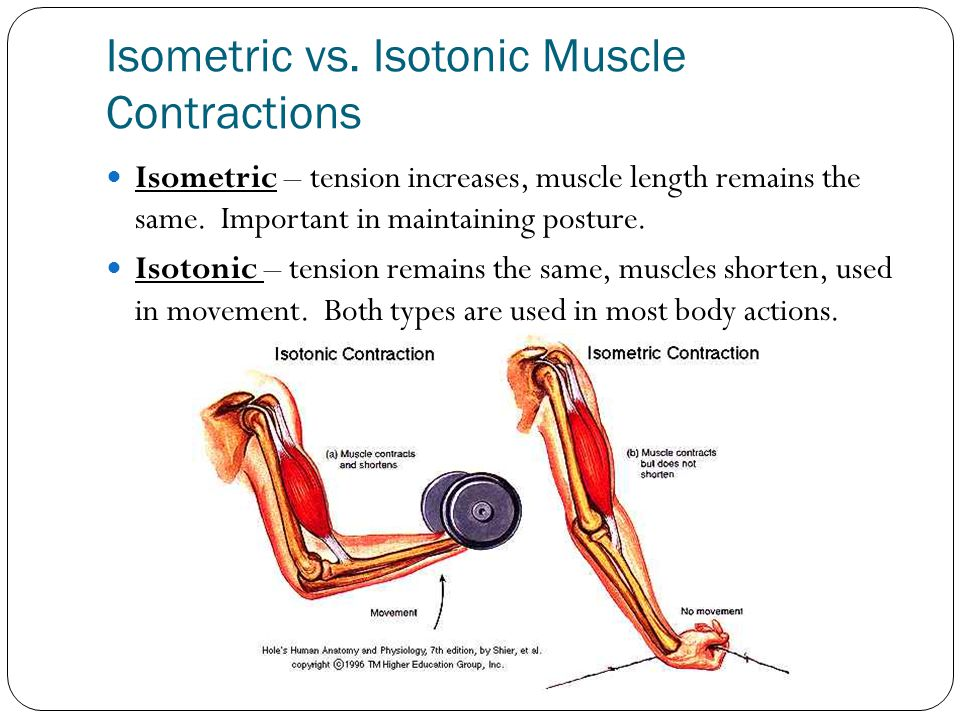 Isometric vs. Isotonic Muscle Contractions