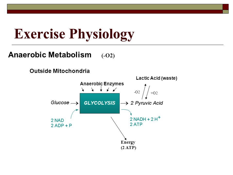 Exercise Physiology Anaerobic Metabolism (-O2) Outside Mitochondria