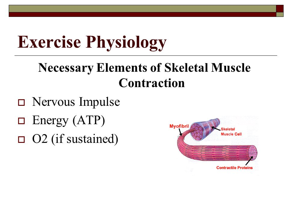 Necessary Elements of Skeletal Muscle Contraction